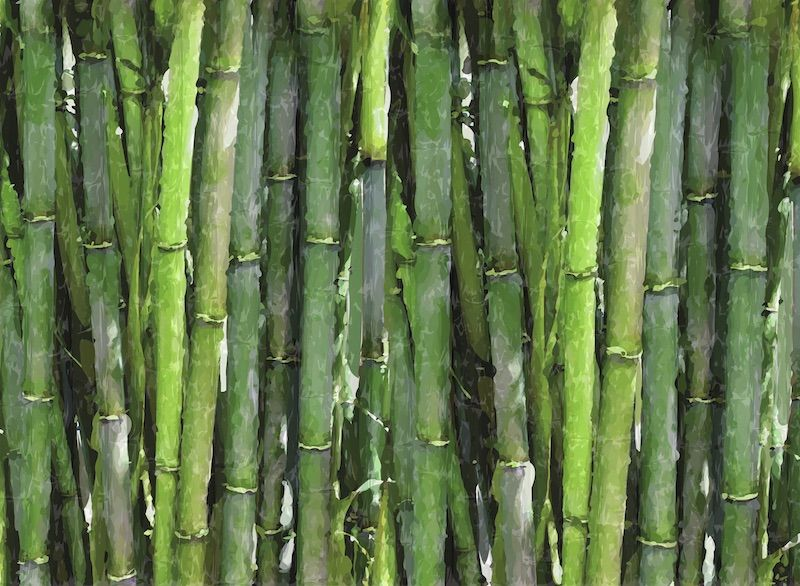 Bamboo style wallpaper
